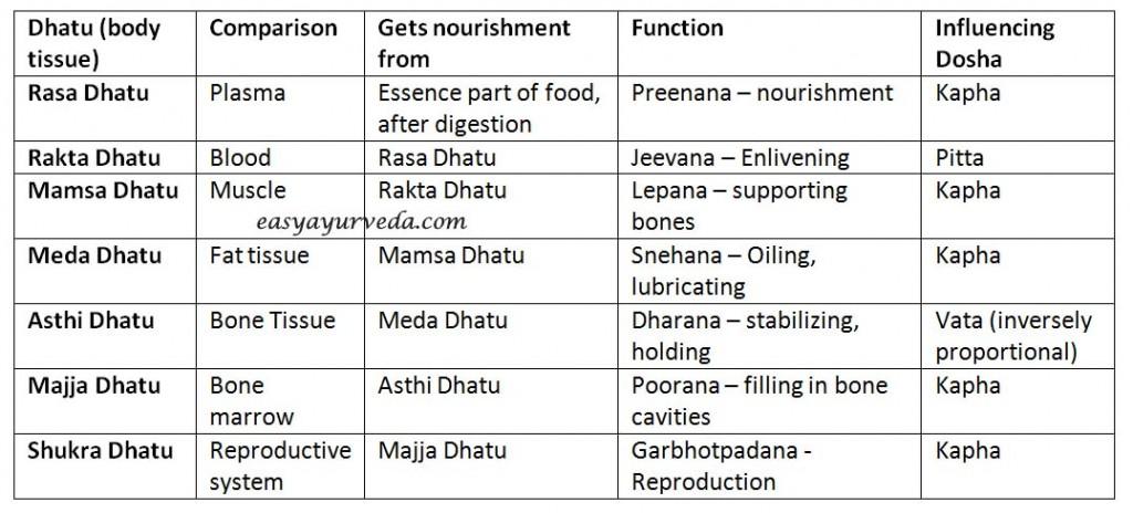 Dhatu – 7 Body Tissues As Explained In Ayurveda | Easy Ayurveda