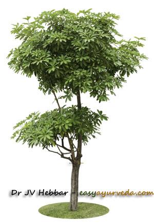 Dita tree