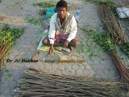 Indian selling neem twigs for teeth brushing
