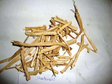 Dry Satavari