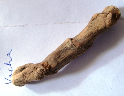 Vacha - Acorus calamus Uses, Research, Side Effects, Remedy