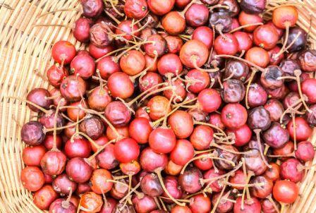 Governor's plum fruits