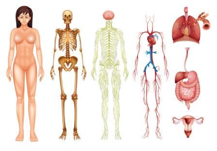 body channels srotas